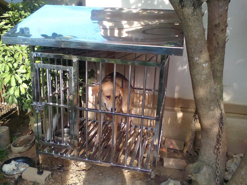 Chuồng chó Inox